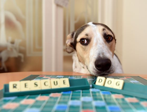 Puzzle for Pooches Scrabble Night