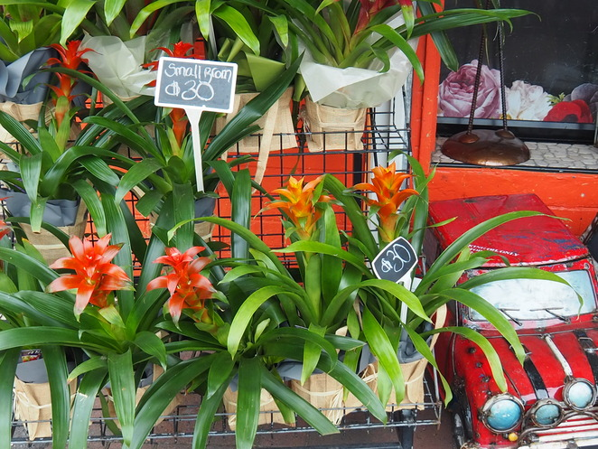 Redcliffe City Florists, flowers, gifts