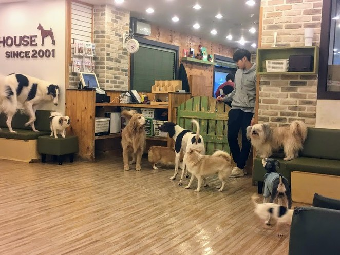 seoul, bau house, dog cafe, south korea, cafes, dogs, bau house dog cafe