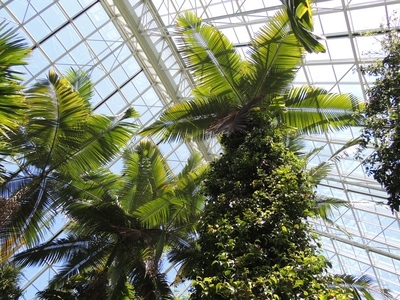 south australia tourism, bicentennial conservatory, whats on in adelaide, what to do in adelaide, gardens in adelaide, gardens of australia, rainforest in australia, australia plants