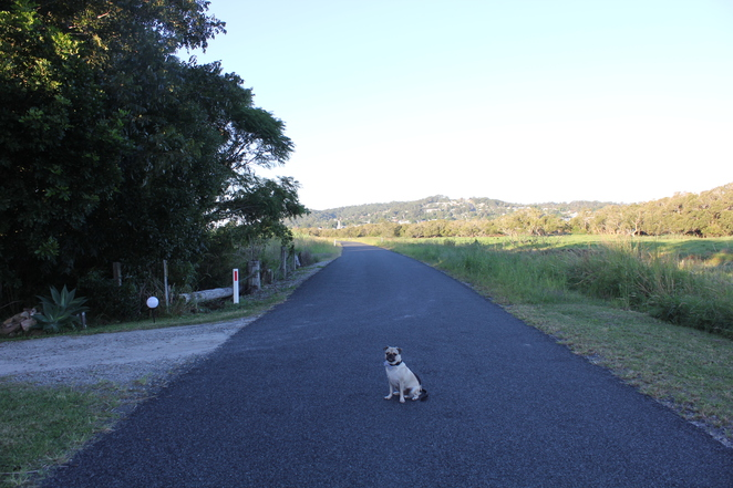 squeaky gate retreat and bnb, hotel, motel, accomodation, dog friendly, pet friendly, maclean, ashby, clarence valley, new south wales, road trip, day trip, brisbane, country, lookout
