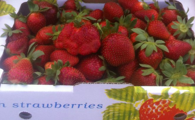 strawberry, berries, pick, farm, fruit, fresh, perth, kids