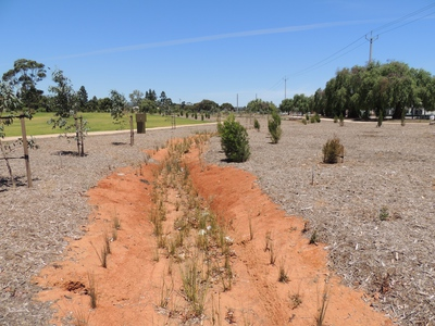sustainable living, urban forest, parklands, Adelaide, Narnungga, DPTI