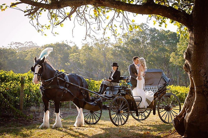Swan Valley Wagon Tours, Alida, Peter, Percheron, Clydesdale, Swan Valley Tourism