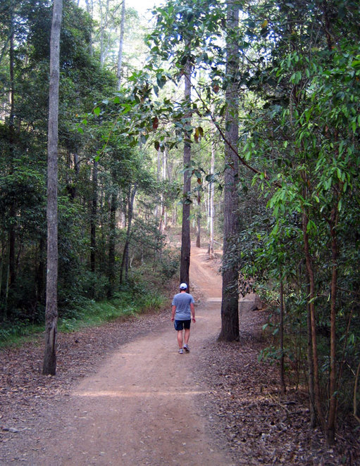 Hiker on the Bellbird Track at Mt Coot-tha