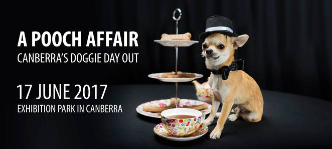 a pooch affair, canberra, ACT, high teas, events, EPIC,