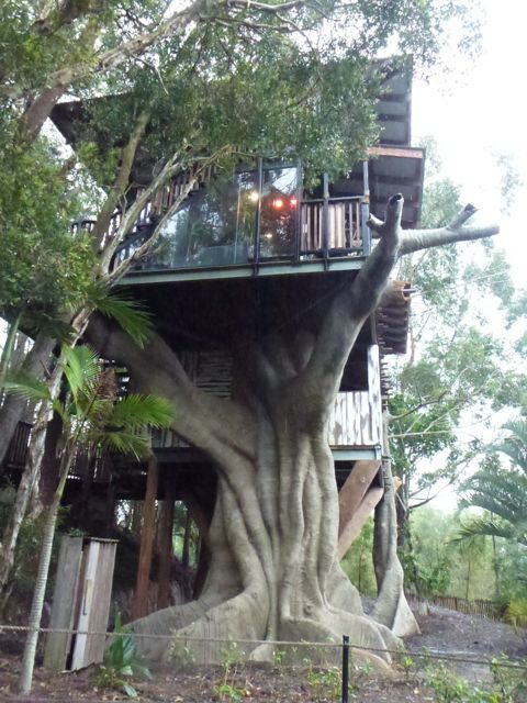 Bindi's Treehouse