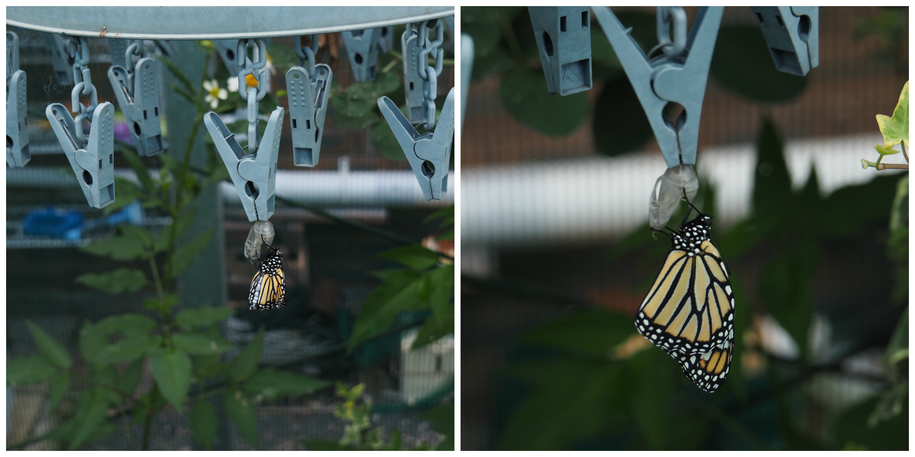 The Butterfly House Bribie Island