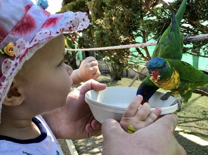Canberra family attractions, gold creek, fun things to do Canberra's, kids activities Canberra, rainy day activities Canberra, Canberra walk in aviary