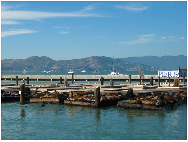 goldebest places to visit in san francisco, San Francisco bay, Pier 39, Fisherman's Wharf