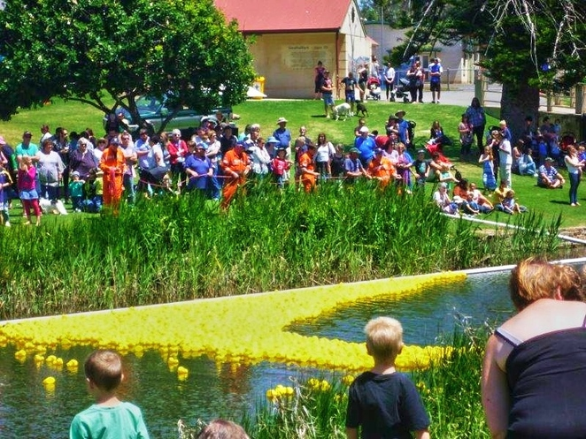 great south australian duck race, great duck race, strathalbyn, strathalbyn soldiers memorial gardens, adelaide hills, rubber ducks, strathalbyn railway station, fun things to do, steamranger, free event