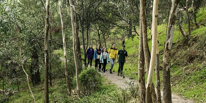 Gresswell Forest, Victoria, Outdoors, Walks, Fun Things to Do, Environment, Health & Fitness