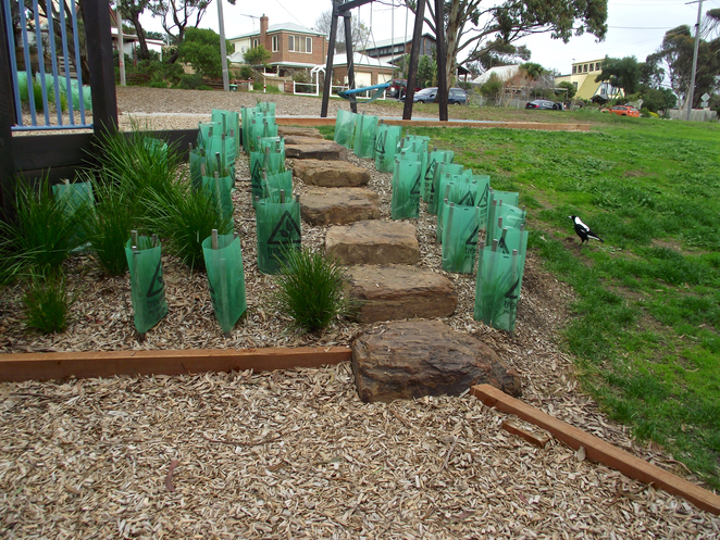 jan juc, Jan Juc creek, playground, park, grass, torquay, new plants, garden, magpie,