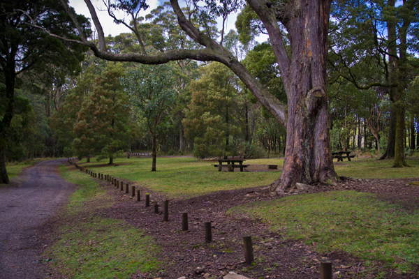 mount macedon, macedon ranges, picnic ground, bush waliks,