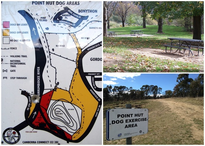 point hut crossing, canberra, dog off leash areas, dog friendly, reserves, murrumbidgee river swimming with dogs, river, dogs