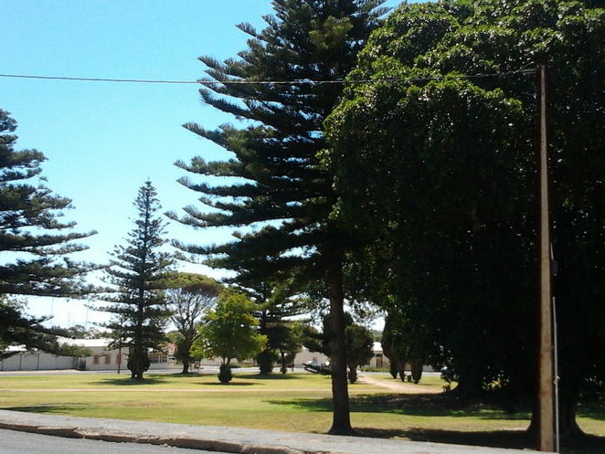 trees, park, Queens Square, Moonta, South Australia