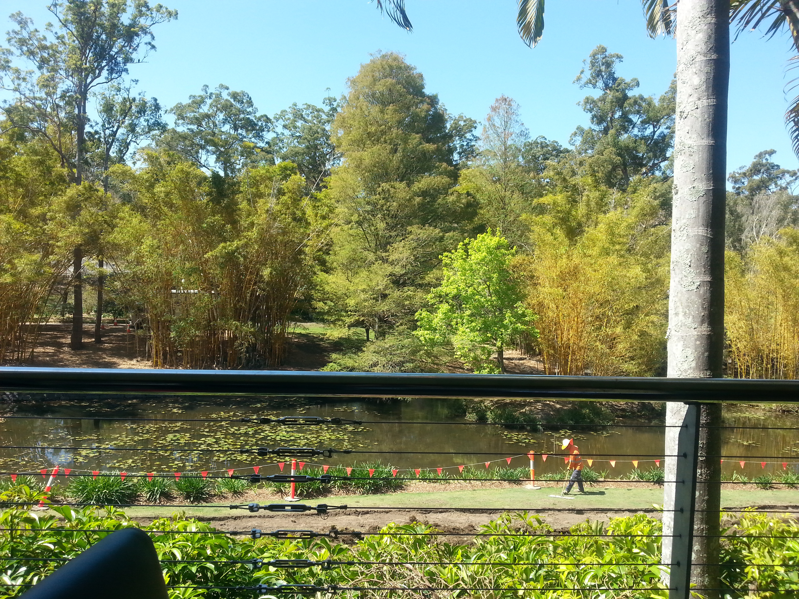 Brisbane botanical gardens mt coot tha cafe fasci garden for Gardening tools brisbane