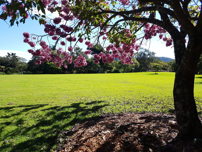 Coffs Harbour botanic gardens, garden walk, biodiversity, picnic area, family friendly