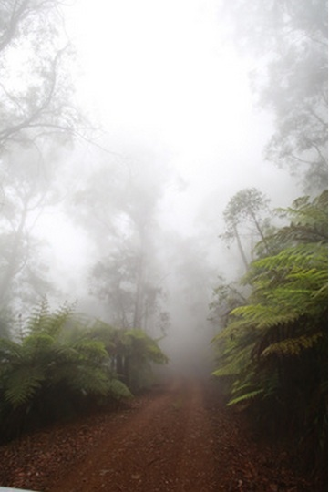 fog, mountain, bush, nature, belowra valley, camp, adventure