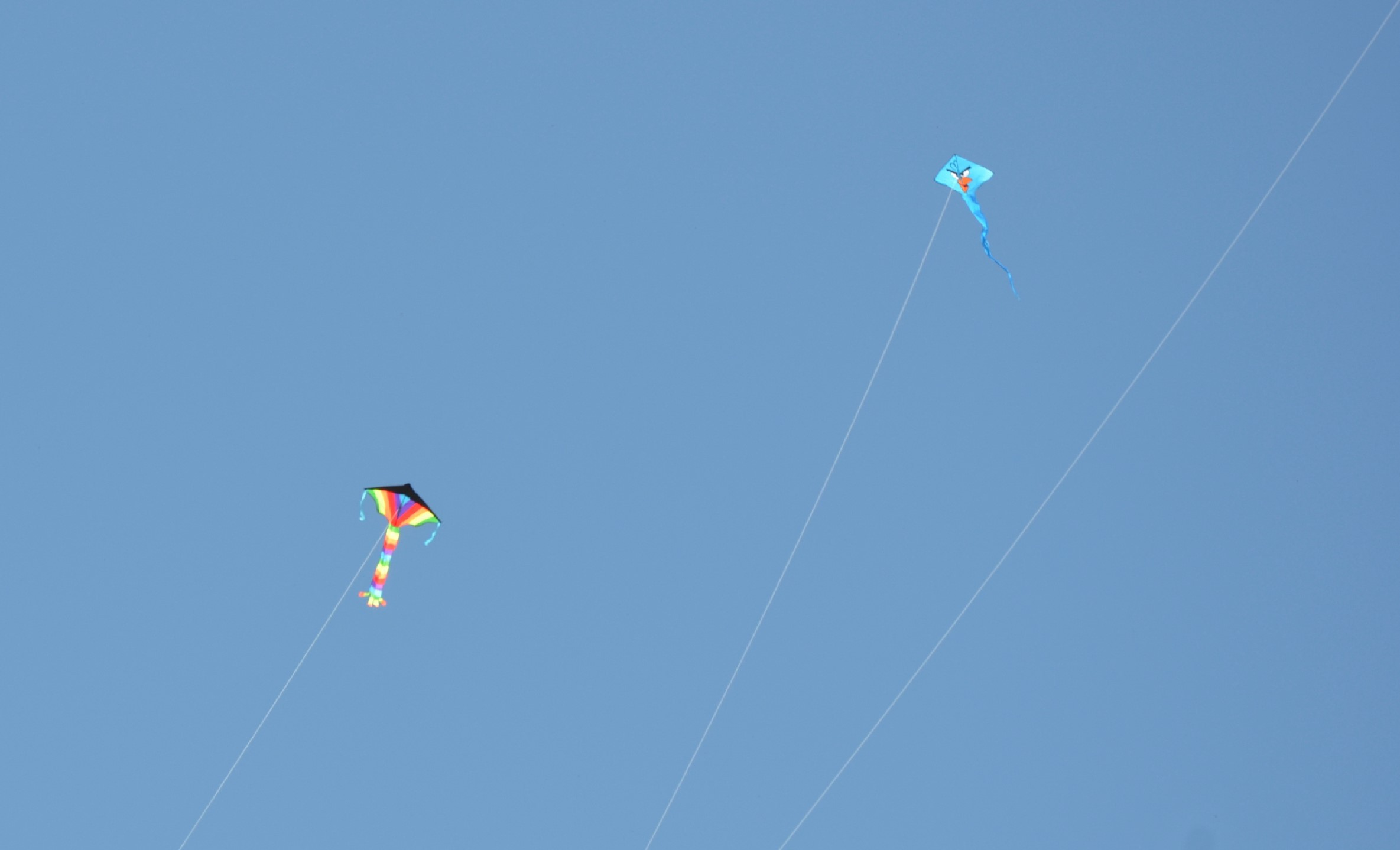 attention getter flying a kite made Kitemaker profile : the big bol because it is such an 'attention getter' and it's my the dragonfly kite made for paul what kite flying experience is your.