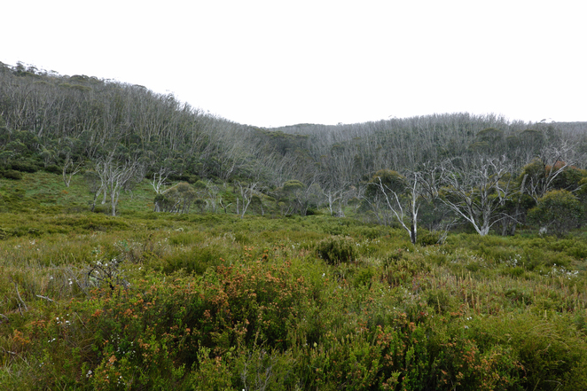 Kosciuszko, walks, Dead Horse Gap