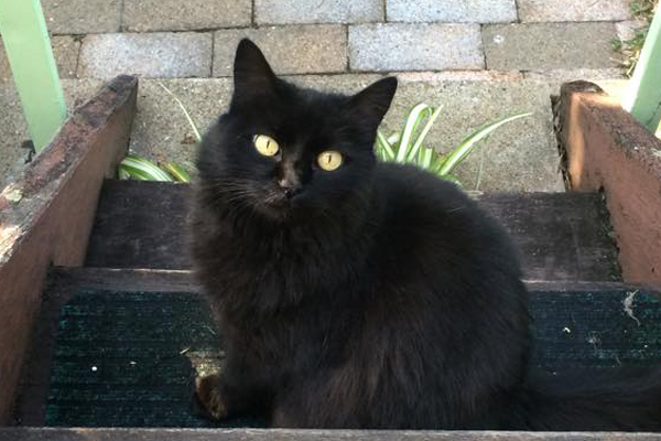 queen, polly, jean, purrypants, cat, rspca, adopted, charity