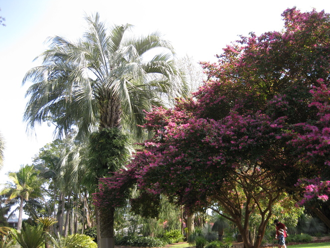 Queens Park Botanic Gardens palm tree and blossoming tree