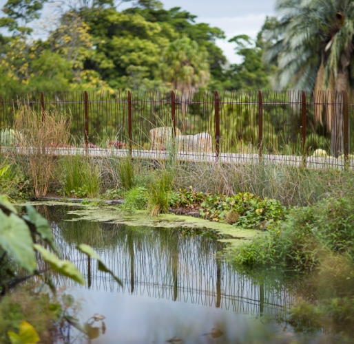Royal Botanic Gardens Free Walking tours