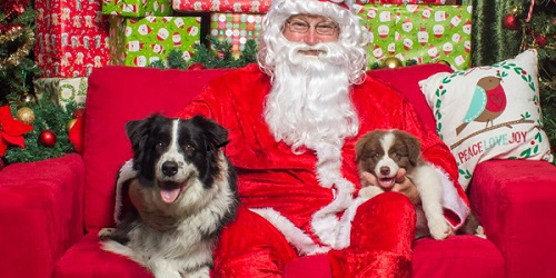 RSPCA, Santa paws, Christmas, Santa claws, photos, photography