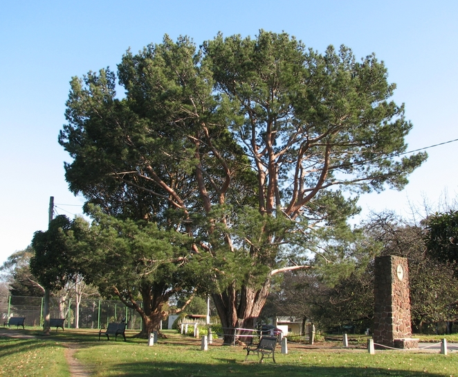 wattle park, burwood, lone pine, historic, melbourne