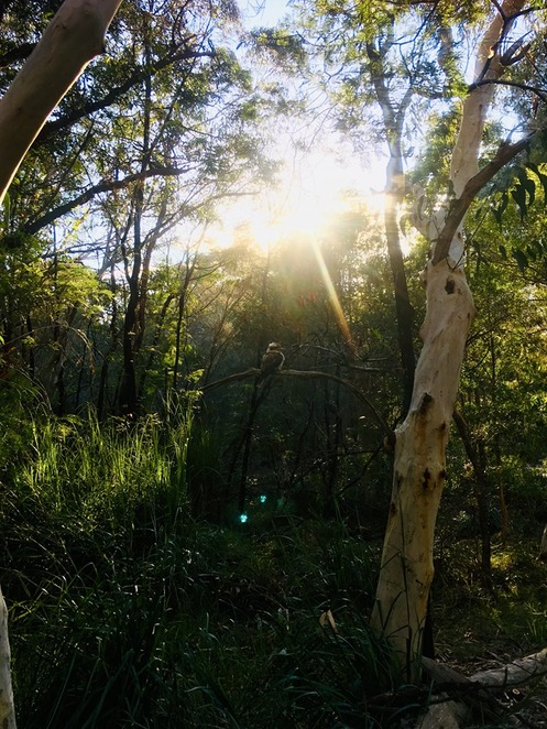 wildflower art and garden festival 2019, community event, fun things to do, ku ring gai wildflower garden, australian plants society north shore group, ku ring gai council, loving living ku ring gai, garden lovers, garden sculptures, botanical garden, environmentally themed garden, sculpture walk, natural or recycled materials, escape the city, entertainment, guided tours, live wildlife displays