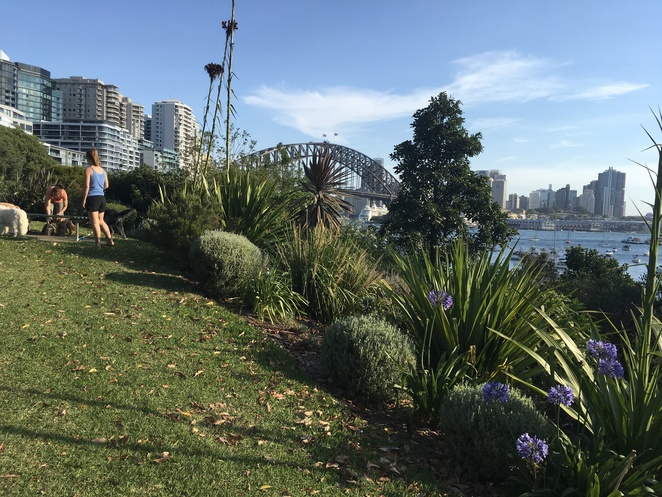 Views of Sydney Harbour from above Wendys Secret Garden.
