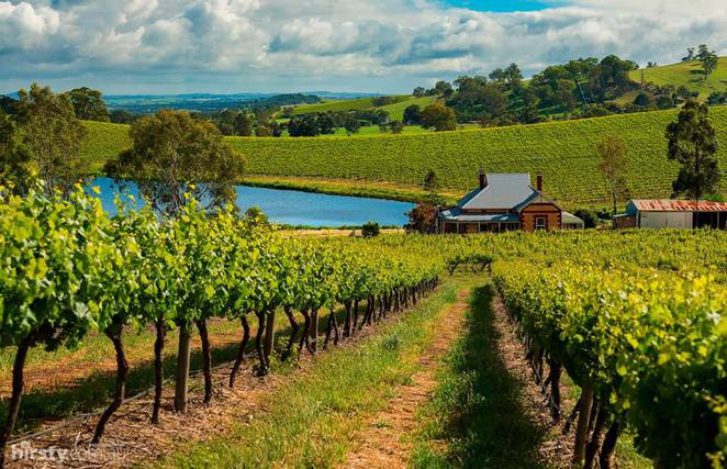Barossa through the eyes of Hirsty Photography