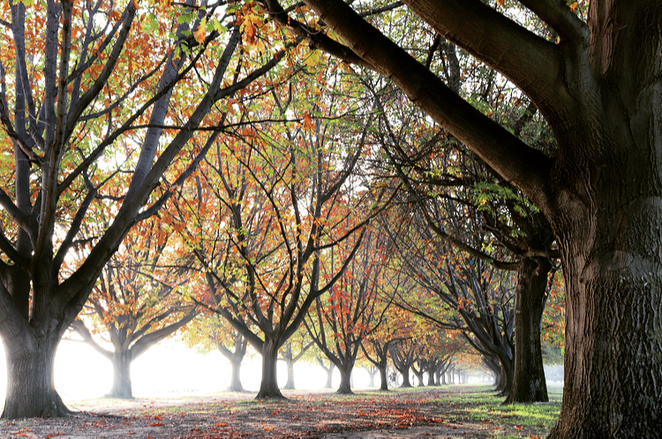 Canberra, autumn, trees, photography, walks, leaves