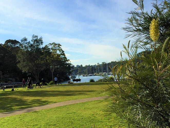coffee, coffe van, cammeray, tunks park, northbridge, sports, boating, tea, muffin, brownie, toastie, outdoors, sports field, exercise, cafe carino, espresso, children's play area