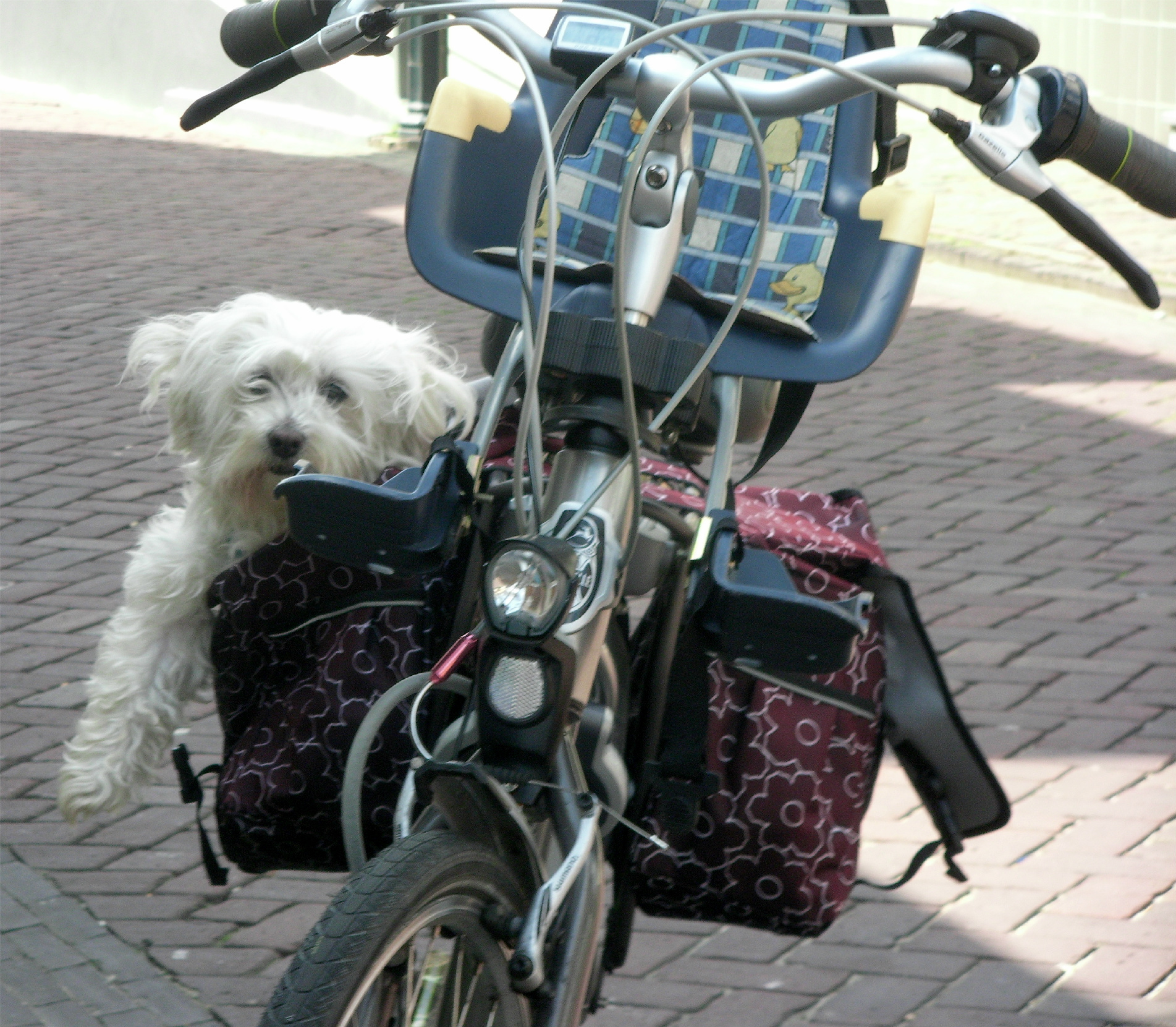 What S The Best Place To Leave Your Dog When You Go Away