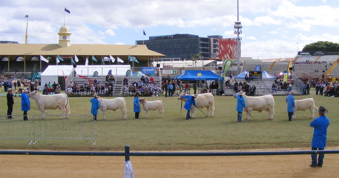 You don't have to check out the livestock at Ekka, but you might as well while you are there
