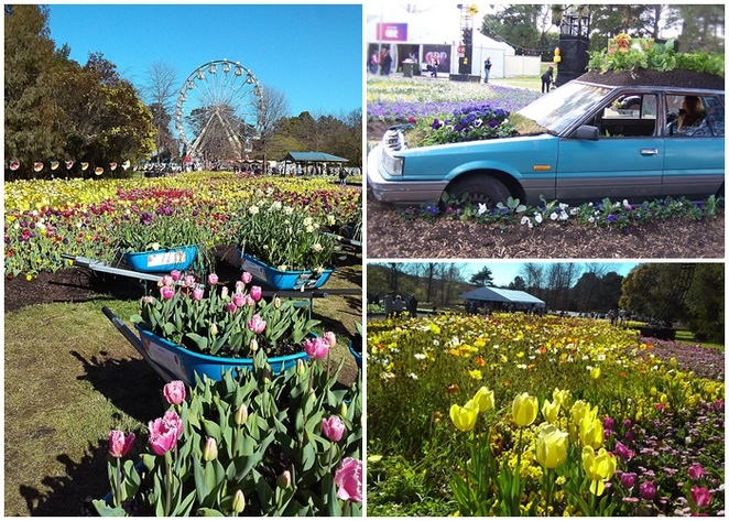 floriade, canberra, 2017, ACT, things to see, things to do, sculptures, art, lake burley griffin, commonwealth park, events,
