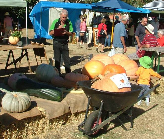 fresh produce, fresh food, organic food, markets, country markets, Wirrabara Producers Market, southern Flinders Ranges, South Australia, biggest gourds