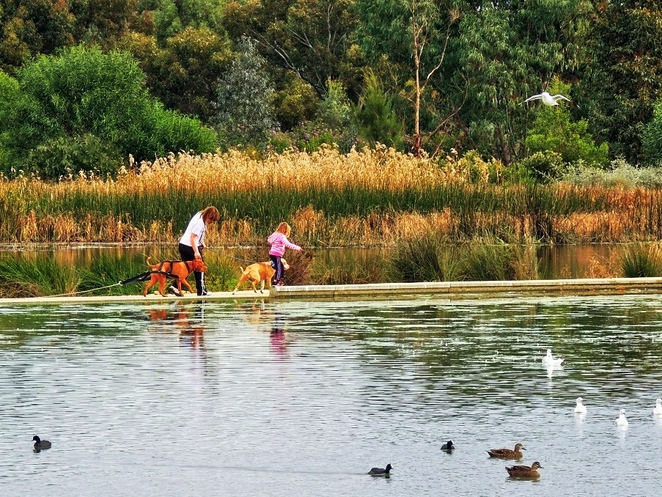 in adelaide, salisbury plays, nature play, salisbury, walking trails, school holidays, fun things to do, free things to do, activities for kids, walking the dog