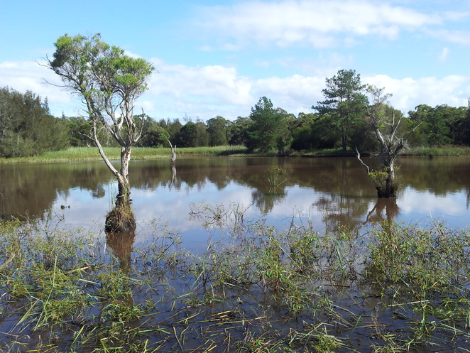 longneck lagoon, scheyville national park, boardwalk, wetlands