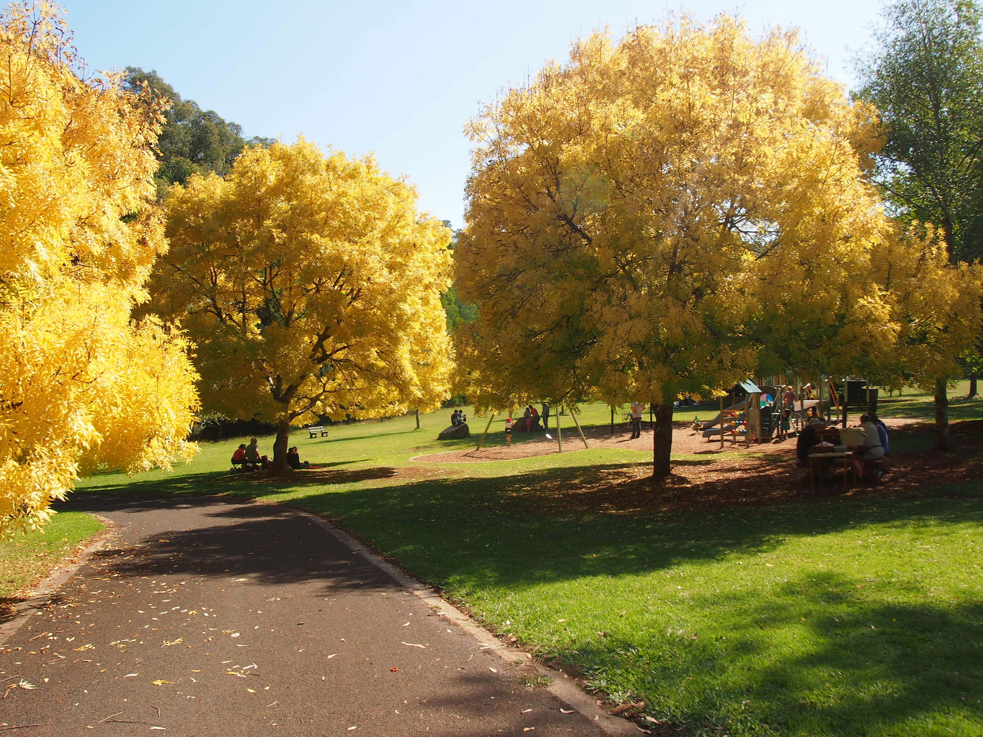 Where 39 s the best autumn garden in melbourne melbourne for Garden trees