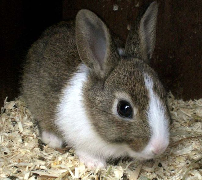 Rabbits And Guinea Pigs