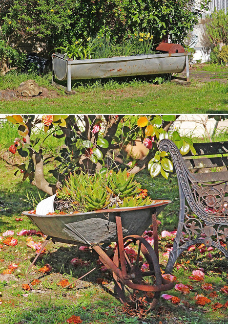 Recycled horse drinking trough and wheel barrow.