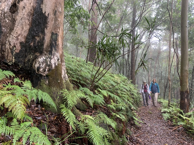 Thylogale Trail, Mount Nebo, D'Aguilar National Park, Café in the Mountains, Egernia Trail, Jollys Lookout,