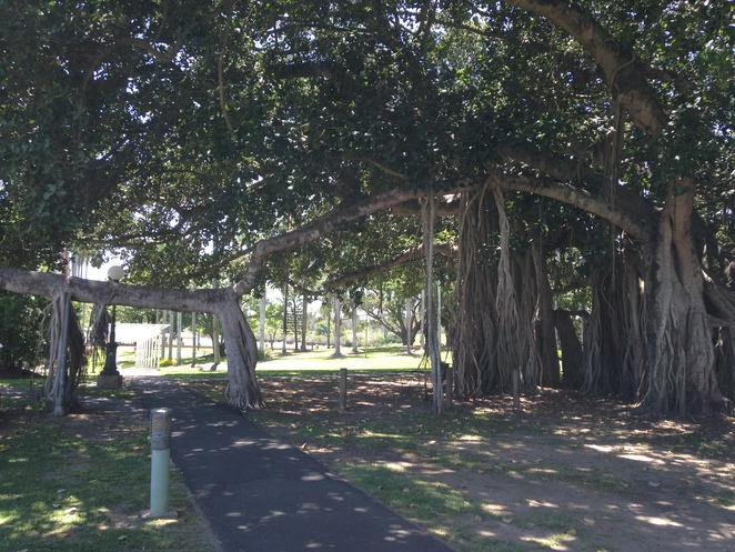 Trees, Parks, Maryborough, Picnics, Sunday Montly Markets