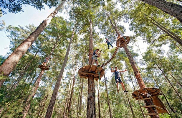 treetop adventure park, central coast, high ropes, nature, outdoor, recreation, family, activity, ourimbah, nsw, climb