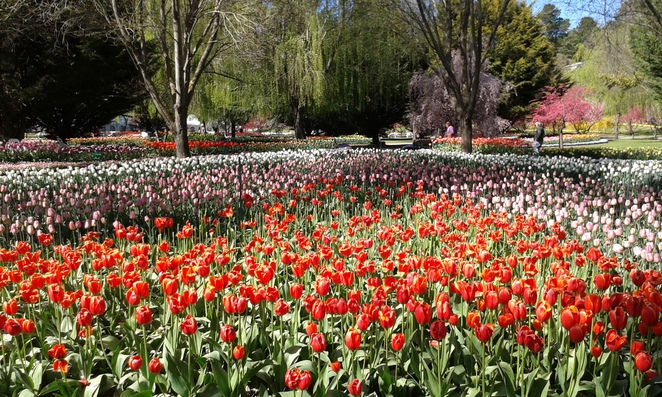 tulip tops garden festival, canberra, events in 2016, canberra, festivals in canberra,
