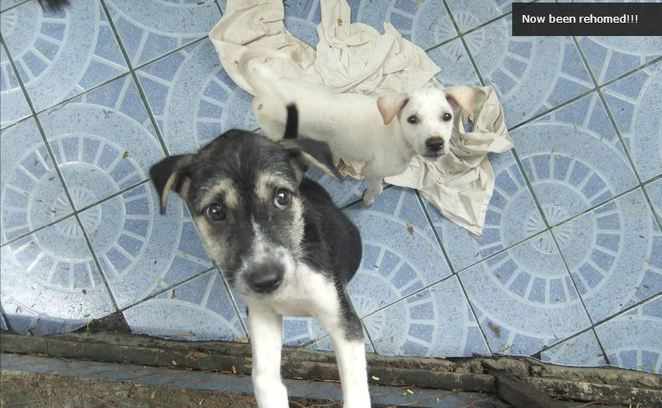BARC, BAWA, dog,rescue,refuge,help,assist,volunteer,volunteering,ubud,bali,street,dogs,cats,kittens,kitten,puppy,puppies