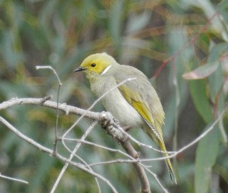 Birdwatching Honeyeater Birds Hide